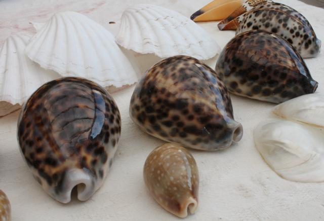 Shellmassage